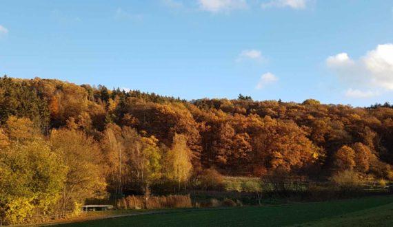 Weiher 2 Herbst